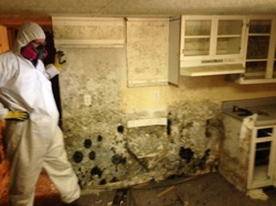 Mold growing on the kitchen walls of a bank foreclosed home