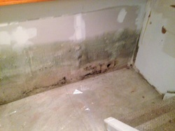 Mold growth on walls in Clifton Park NY home