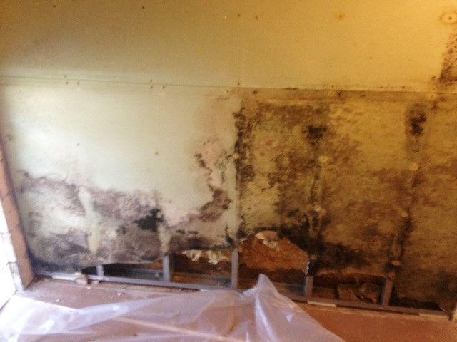 Mold growth on interiors walls